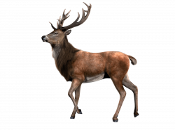 Reindeer Looking transparent PNG - StickPNG