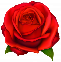 Image of Clip Art Red Rose #7092, Red Roses Clip Art Images Free ...
