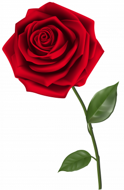 Single Red Rose PNG Clipart Image | Roses | Pinterest | Single red ...