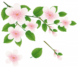 Spring Tree Branch with Flowers PNG Clipart Picture | dekopaj ...