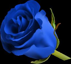 Blue Rose PNG Clip Art Image | ClipArt | Pinterest | Blue roses, Art ...