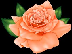 Beautiful Orange Rose PNG Clipart
