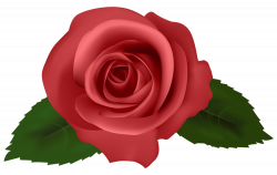 Rose Red PNG Clipart