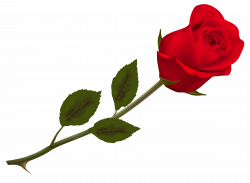 Transparent Beautiful Red Rose PNG Picture | Gallery Yopriceville ...