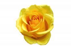 Single Yellow Rose Royalty Free Stock Image 24406506 Clipart ...
