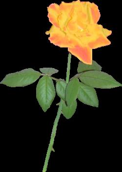 Yellow Rose 02 by clipartcotttage on DeviantArt