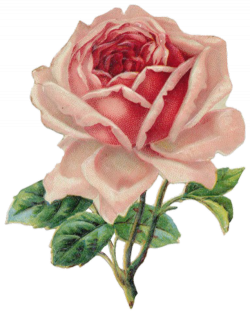 transparent floral | Tumblr