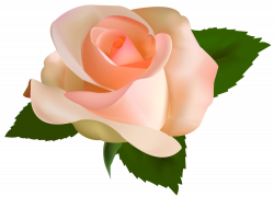 Beautiful Rose PNG Clipart