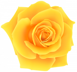 Yellow Rose PNG Clip Art Image | Gallery Yopriceville - High ...