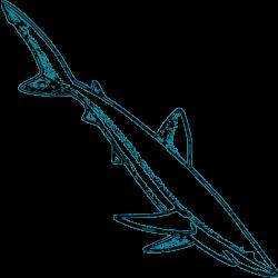 Clipart - Blue Shark