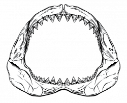 Shark Jaws PNG Transparent Shark Jaws.PNG Images. | PlusPNG
