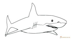 Free Great White Shark Clipart traceable, Download Free Clip ...