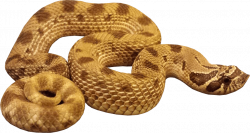 Anaconda Snake transparent PNG - StickPNG