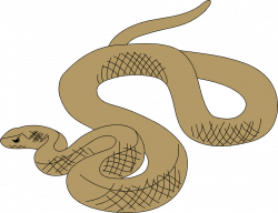 Snakes | Free Stock Photo | Illustration of a brown snake | # 2999