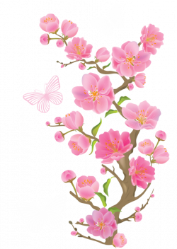 Spring Cherry Blossoms with Butterflies PNG Clipart Picture ...