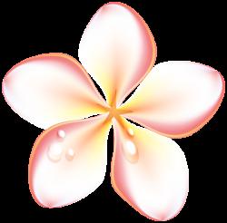 Gallery - Flowers PNG
