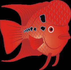 Flowerhorn Fish Clip Art at Clker.com - vector clip art online ...