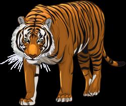 download-Tiger-PNG-transparent-images-transparent-backgrounds ...