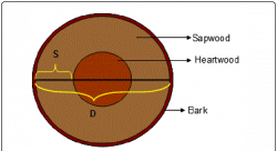 Cross section of a typical tree trunk (S=sapwood depth, D=heartwood ...