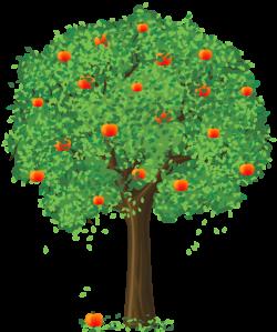 Pin by Mary Pereira on Trees | Apple tree, Summer trees ...