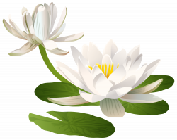 Water Lily PNG Clip Art Image - Best WEB Clipart