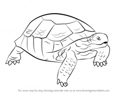 Learn How to Draw a Desert Tortoise (Turtles and Tortoises ...