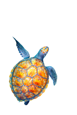 28+ Collection of Sea Turtle Drawing Tumblr | High quality, free ...