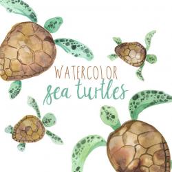 Watercolor Sea Turtles Illustration, Sea Turtle clipart, Turtle clip art,  Tropical Animal Clipart, Marine Life, Summer Animals, Amphibians