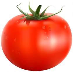 Tomato PNG Clipart Picture | Gallery Yopriceville - High-Quality ...