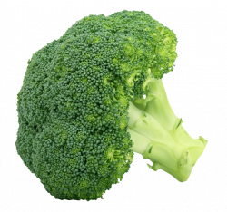 Free Broccoli PNG Clipart - peoplepng.com