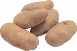 potato PNG image, free picture
