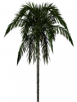 Clipart Download Png Palm Tree #31903 - Free Icons and PNG Backgrounds