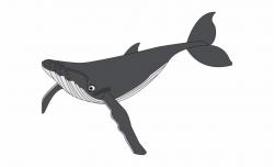 Blue Whale Clipart Grey Whale - Fin Whale Clip Art - whale ...