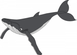 Free Gray Whale Cliparts, Download Free Clip Art, Free Clip ...
