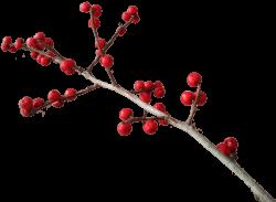 Christmas Branch Decoration transparent PNG - StickPNG