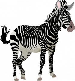 Zebra 3 Clip Art at Clker.com - vector clip art online, royalty free ...