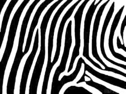 Free Zebra Print Cliparts, Download Free Clip Art, Free Clip ...