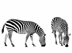Zebra Illustration Clipart Free Stock Photo - Public Domain ...