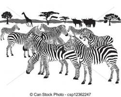 EPS Vector of herd of zebras csp12362247 - Search Clip Art ...
