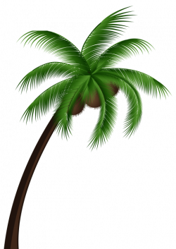 coconut palm tree png - Free PNG Images | TOPpng
