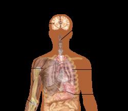 Influenza - Wikiwand
