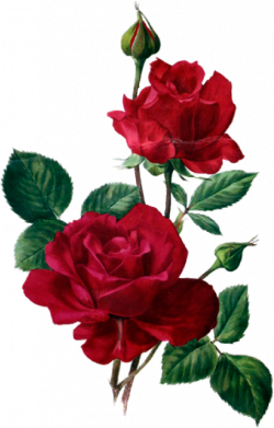 Pin by Екатерина Бриль on цветы | Pinterest | Red roses, Flowers and ...
