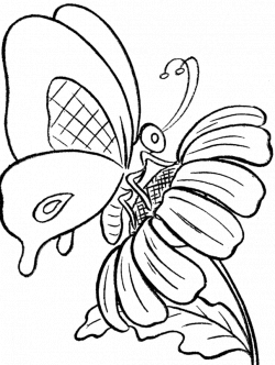 Butterfly And Sun Flower Coloring Print - Butterfly cartoon coloring ...