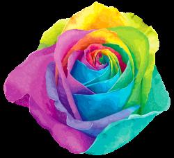 Multicolored Rainbow Rose Transparent PNG Clip Art Image   Photo ...