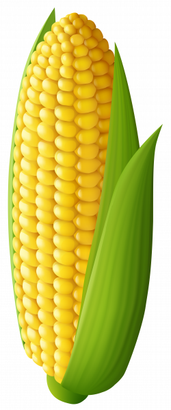 Corn Transparent PNG Clip Art Image | Gallery Yopriceville - High ...