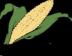 Drawing of corn vegetable crop free image