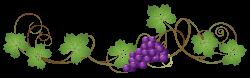Vine_Decoration_PNG_Clipart_Picture.png (5130×1608) | Grapes & Vines ...