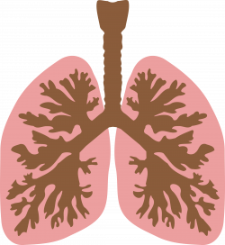 Lung Clipart | Clipart Panda - Free Clipart Images