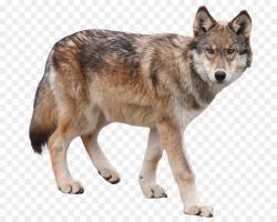 Wolf Cartoon clipart - Dog, Wolf, transparent clip art