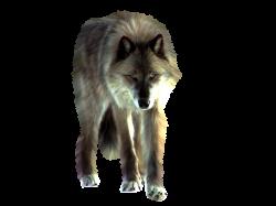 PNG Wolf by ITSDura.deviantart.com on @deviantART | Wolf Stock ...